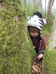 Young boy finding treasures in the crook of a tree trunk.